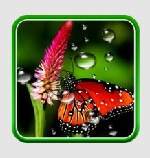 rain_lwp-logo
