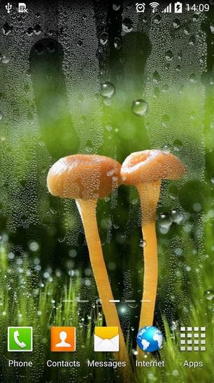 rain_lwp1